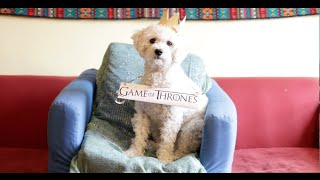 Mad Game: Mad Men/Game of Thrones Mashup (1080p)