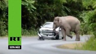 Un elefante furioso aplasta el coche de unos turistas en Tailandia