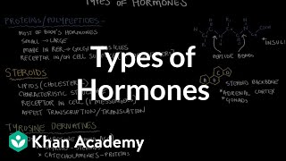 Types of hormones   Endocrine system physiology   NCLEX-RN   Khan Academy