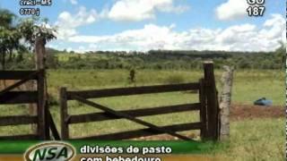 fazenda em Trindade - GO 329 ha
