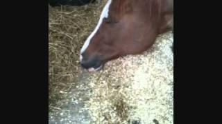 Equine Reiki puts horse to sleep