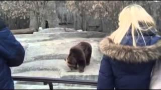 Praski niedźwiedź