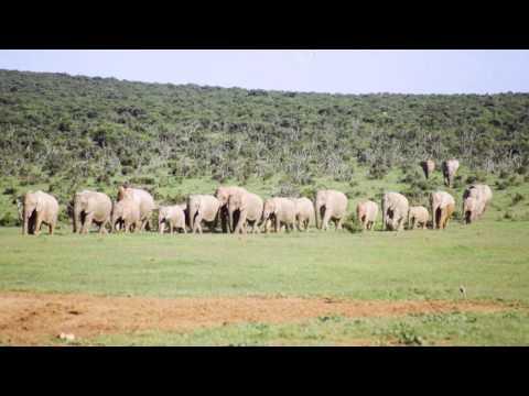 South Africa Safari  Call us on:  +27 83 941 6196 Imvelaphi Safaris
