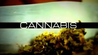 Drum And BAss - Gold / Cannabis