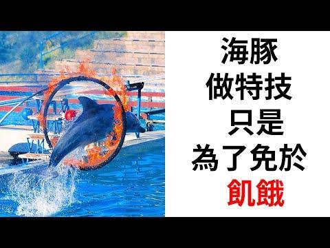 8個絕不再看海豚表演的理由 - YouTube