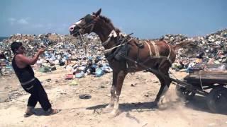 Nacido en Gaza - Trailer
