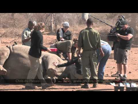 Australia TV Rhino Film Shoot – South Africa Travel Channel 24