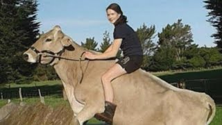 Girl Trains Cow To Do Tricks When She's Not Allowed to Have Horse