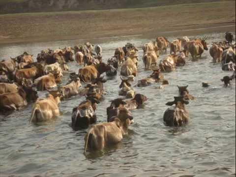 Natural beauty of bengal