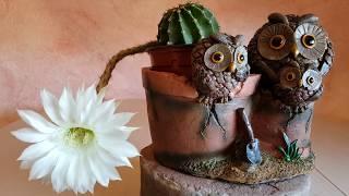 Echinopsis eyriesii - Ombligo de la reina - Cactus erizo