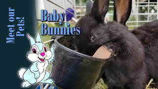 Meet my pets Baby Bunnies!