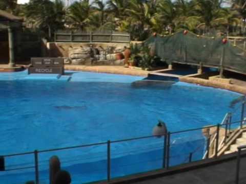 Delfiny w oceanarium w Durbanie 3/5