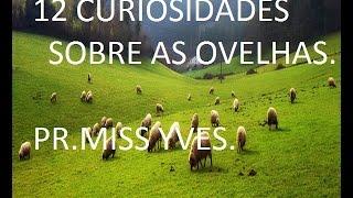 12 CURIOSIDADES SOBRE AS OVELHAS - PR.MISS YVES
