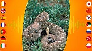 Reptile Sounds: Western Diamondback Rattlesnake