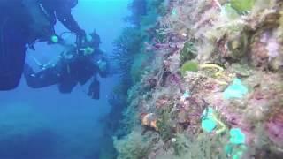 Acció pilot de restauració de gorgònies al Parc Natural del Montgrí, Illes Medes i Baix Ter