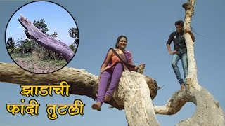 Sairat's Iconic Tree No More | Blockbuster Marathi Movie | Rinku Rajguru, Akash Thosar
