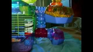 Robo hamsters Chillie and gizmo in there crittertrail cage