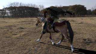 Horse gallop crappy sound