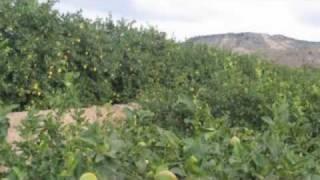 Tehua. Al pie de los limoneros