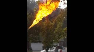 Il brule un nid de guêpes avec un lance flamme | LABLAGUETV