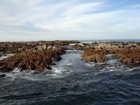 Seal Island, Gansbaai, South Africa