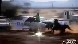Talison Miranda montando Apache dash, Bahuan Bee, e Bramha Lee##