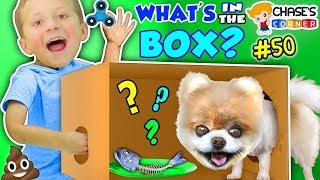 Chase's Corner: What's in the Box Challenge w/ Little Bear the Pomeranian Puppy (#50)   DOH MUCH FUN