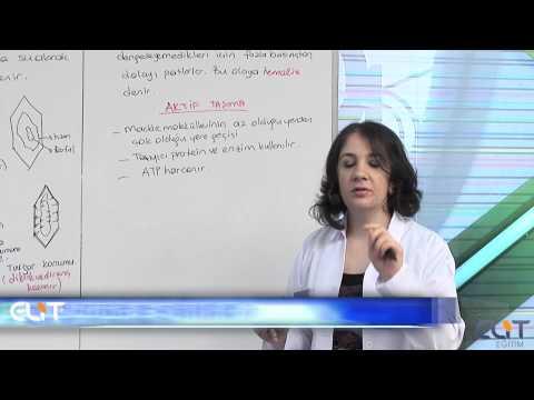 Elit Eğitim Biyoloji Dersi - Canlılığın Temel Birimi Hücre Demosudur