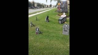 2013 Halloween - Daytime