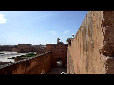 Morocco 2010 Video Diary – Video 11 – It's A Bird