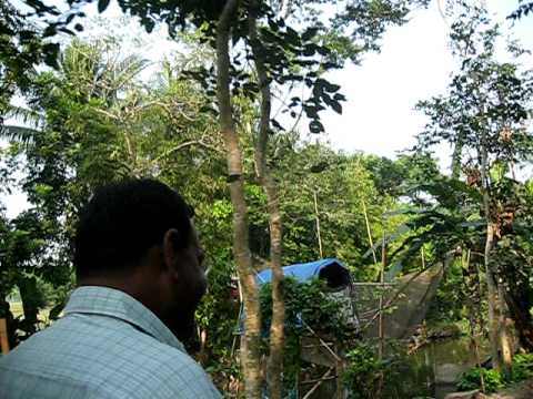 In the Jungle of Bangladesh