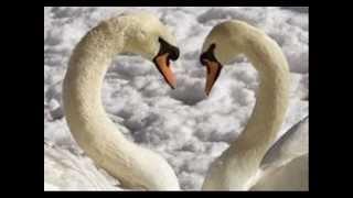 O lago dos cisnes- Tchaikowski