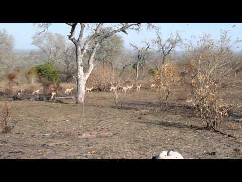 Run Like an Antelope – Mala Mala, South Africa