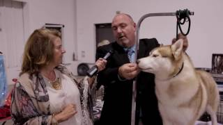 Cindy Interview with the #1 Siberian Husky and Working Dog in Canada