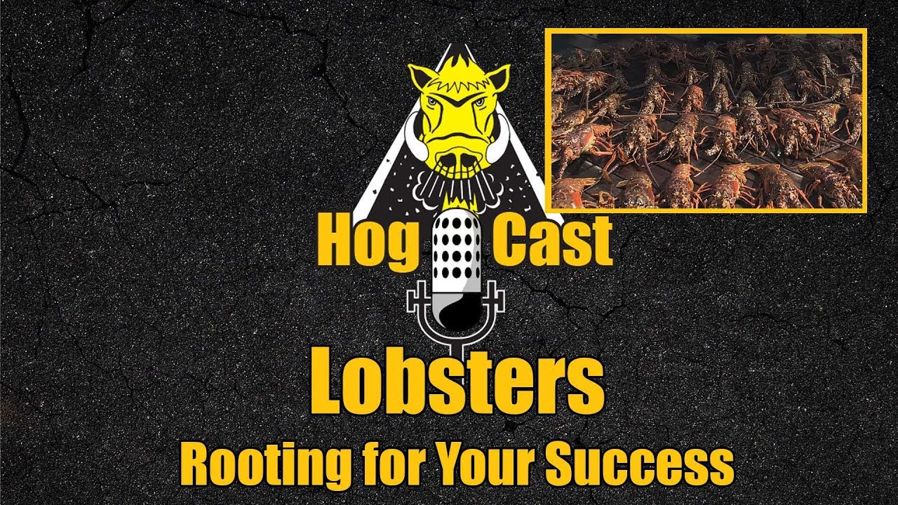 Hog Cast - Lobsters
