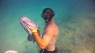 "Bahamas Spearfishing ""Real Primitive Hunting"""