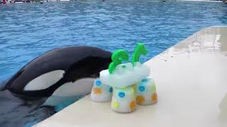 Happy 13th Birthday, Ikaika!   SeaWorld San Diego