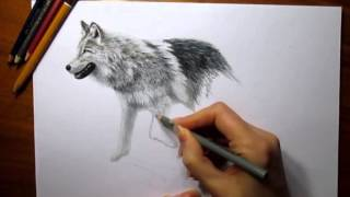 3d art drawing on paper - wolf walking
