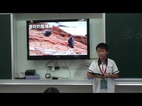 探索藍磯鶇 - YouTube