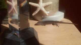 Removing a Lizard from the Bedroom