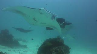 Diving Raja Ampat in 4K UHD