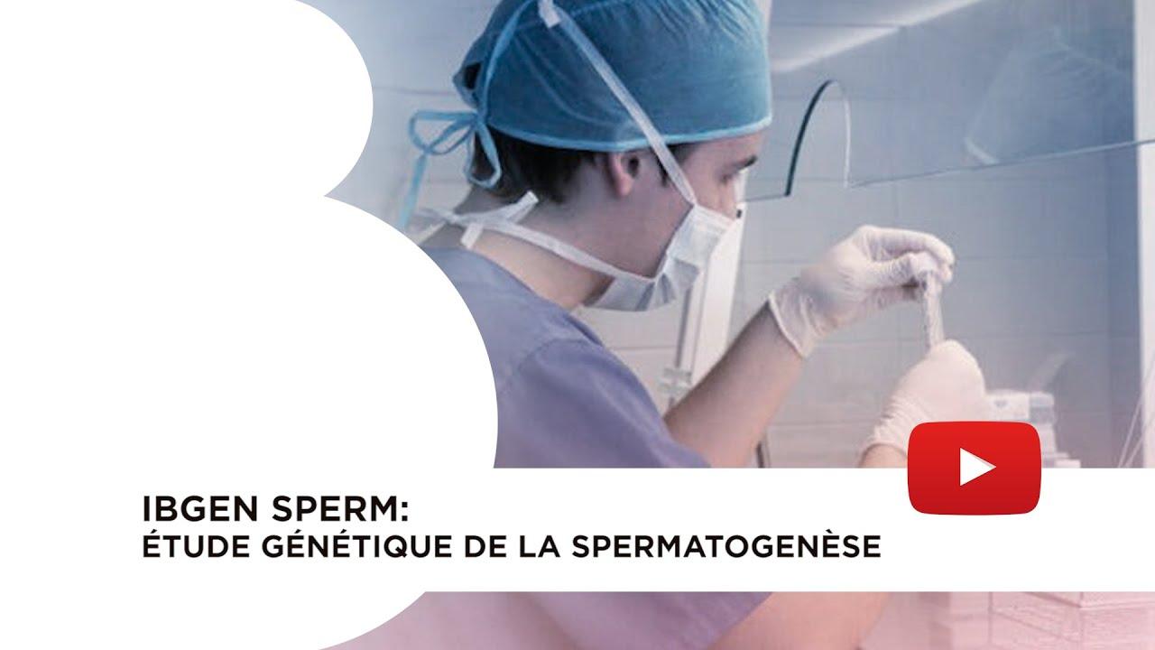 IBgen Sperm étude génétique de la spermatogenèse