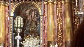Virgen de las nieves, rosa de pitimini