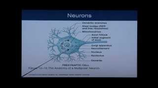 Anatomy and Physiology Chapter 12 Part 1: Nervous System/Neural Tissue: Anatomy and Physiology Help