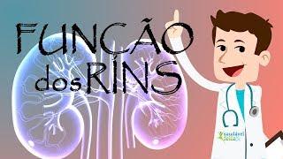 Qual a função dos rins? Aprenda tudo em 2 minutos
