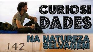 CURIOSIDADES - NA NATUREZA SELVAGEM