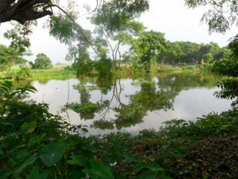Bejura gram-the ideal village of Habiganj, Bangladesh