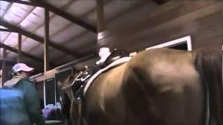 Jewl (My Webkinz) Rides A Horse