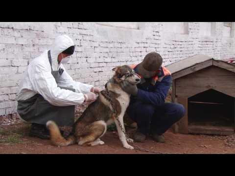 Командно штабные учения в Куюргазинском районе 2014 год. фильм 2