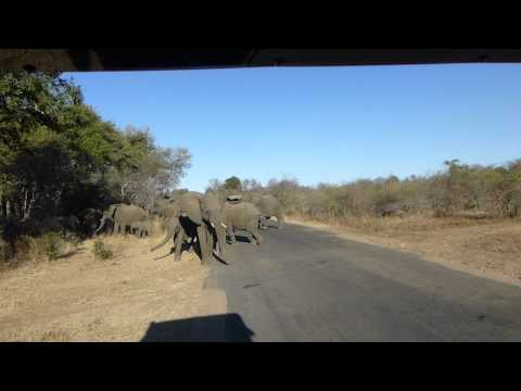 Kruger Park,  South Africa,  Elephants crossing road
